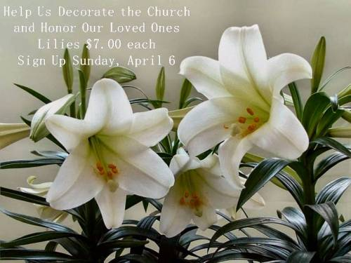 Easter Lilies 2014